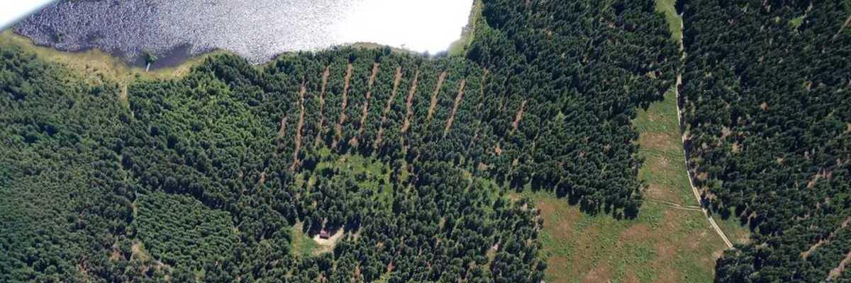 Verortung via Georeferenzierung der Kamera: Aufgenommen in der Nähe von Gemeinde Grafenschlag, Österreich in 0 Meter
